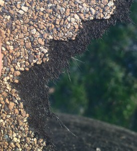 This closeup of a torn shingle shows the threads of the fiberglass, the asphalt matting and the protective granules.